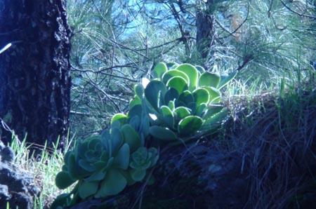 flora valleseco
